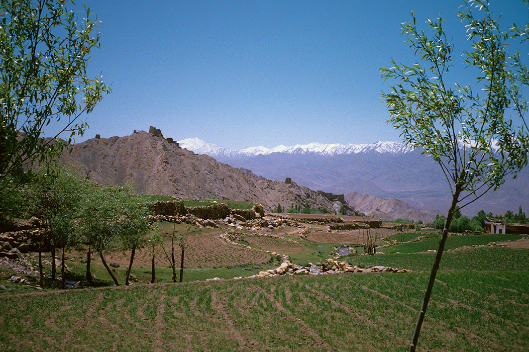 Summer fields surrounding Shankar Village, Leh, Ladakh 1978 - Tim Trompeter